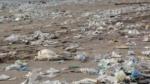 Kan et lykketræf fjerne PET-forureningen?
