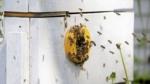 Forskere opdagede en bikube af plast